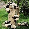 Niedźwiadki Panda – puzzle tiny pandas